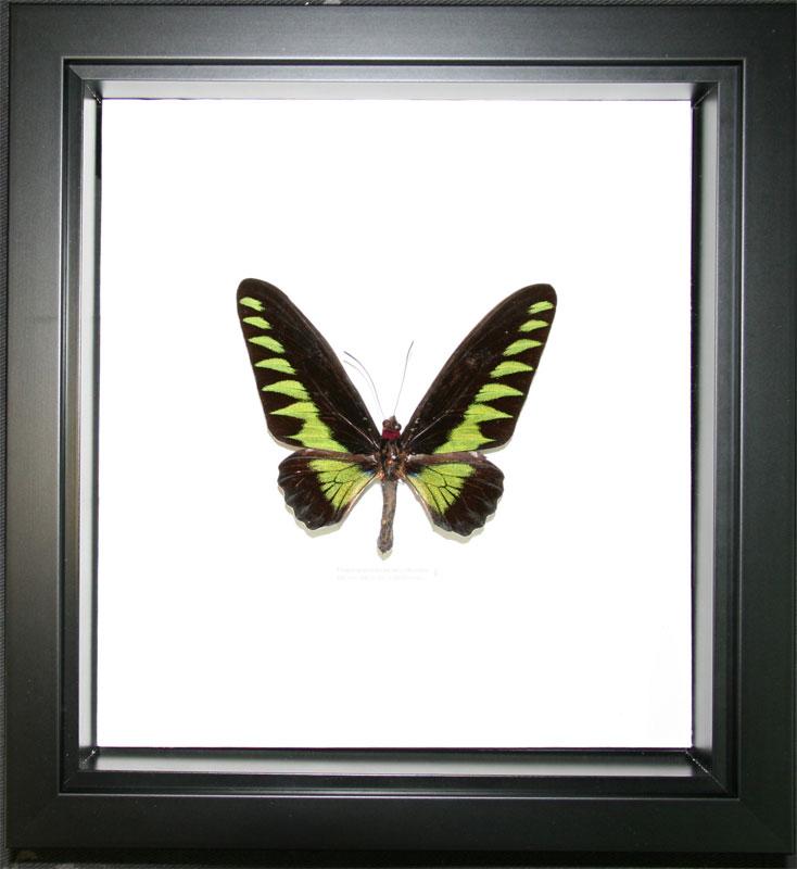 Boitage avec papillon